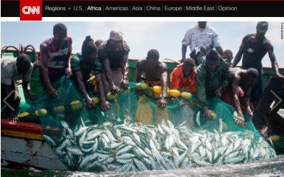 The great fish robbery that costs Africa billions